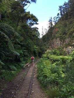 Karangahake Gorge walk.